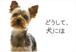 スクリーンショット 2012-06-06 20.56.17.png